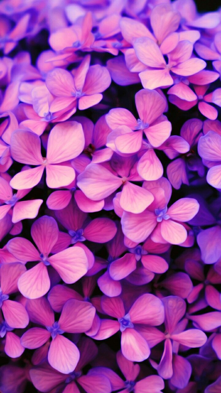 purple #flower #wallpaper #pink #İphone #apple #iphone #wallpaper