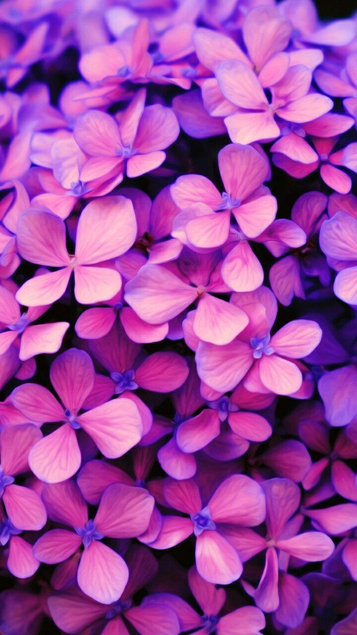 Tumblr iphone wallpaper purple -  Purple Flower Wallpaper Pink Phone Apple Iphone Wallpaper