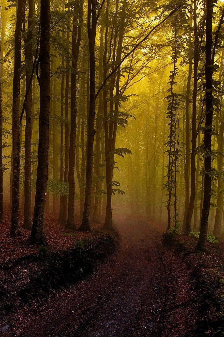 Green road, by Mario de Marzi