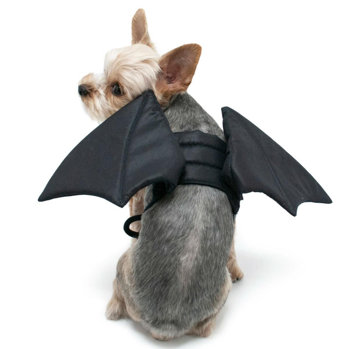 Bat Wings Dog Costume By Dogo Bat Dog Pet Paws Dog Sweaters