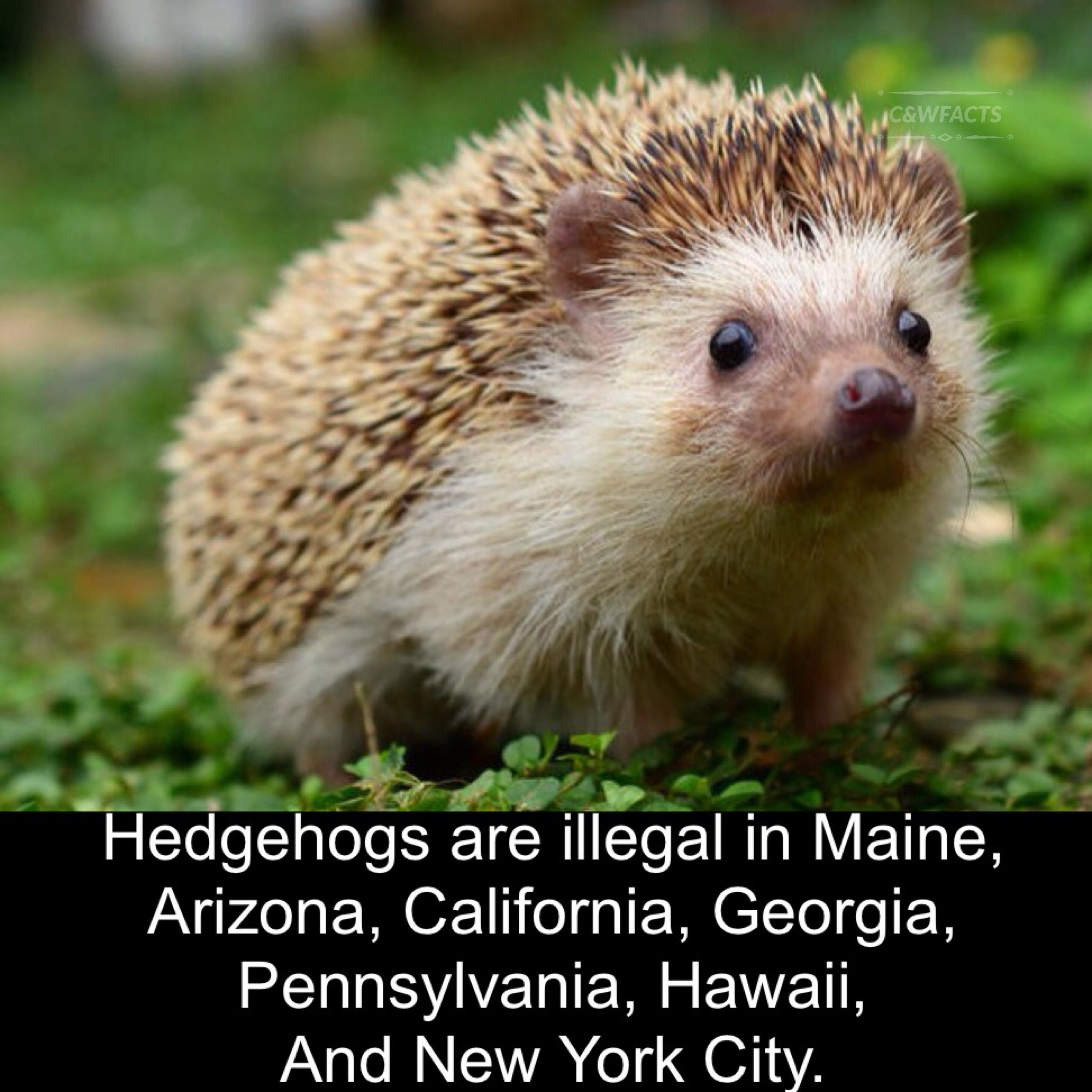 Pin By Cool And Weird Facts On Animals Cute Wild Animals Baby Wild Animals Animals Beautiful