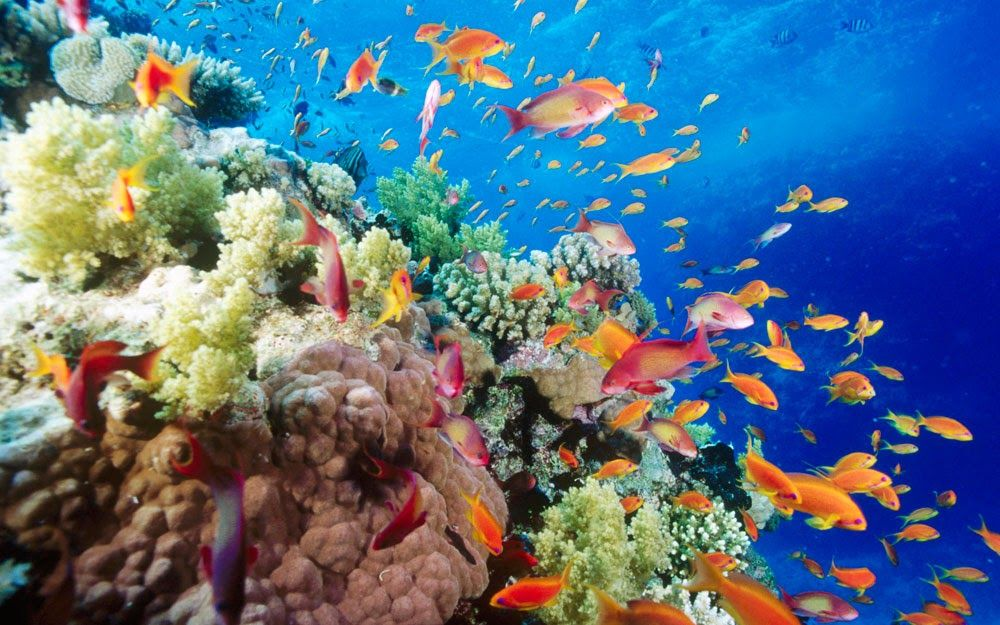 Fantastis 30 Pemandangan Bawah Laut Gambar Para Ikan Bermain Bersama Sama Dengan Penyu Tersebut Pemandangan Bawah Laut Yang Di 2020 Pemandangan Ikan Tropis Lautan