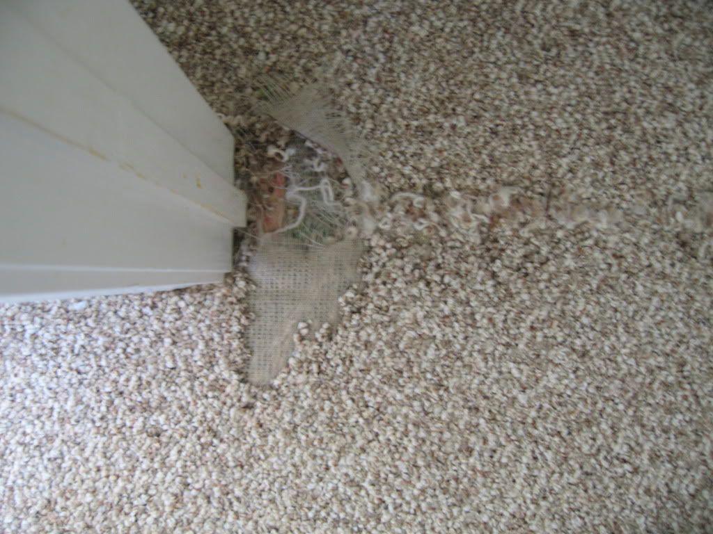 How To Patch Damaged Carpeting Stepbystep Carpet Repair