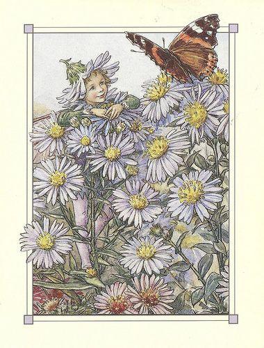 Cicely Mary Barker The Michaelmas Daisy Fairy Flower Fairies Fairy Art Cicely Mary Barker