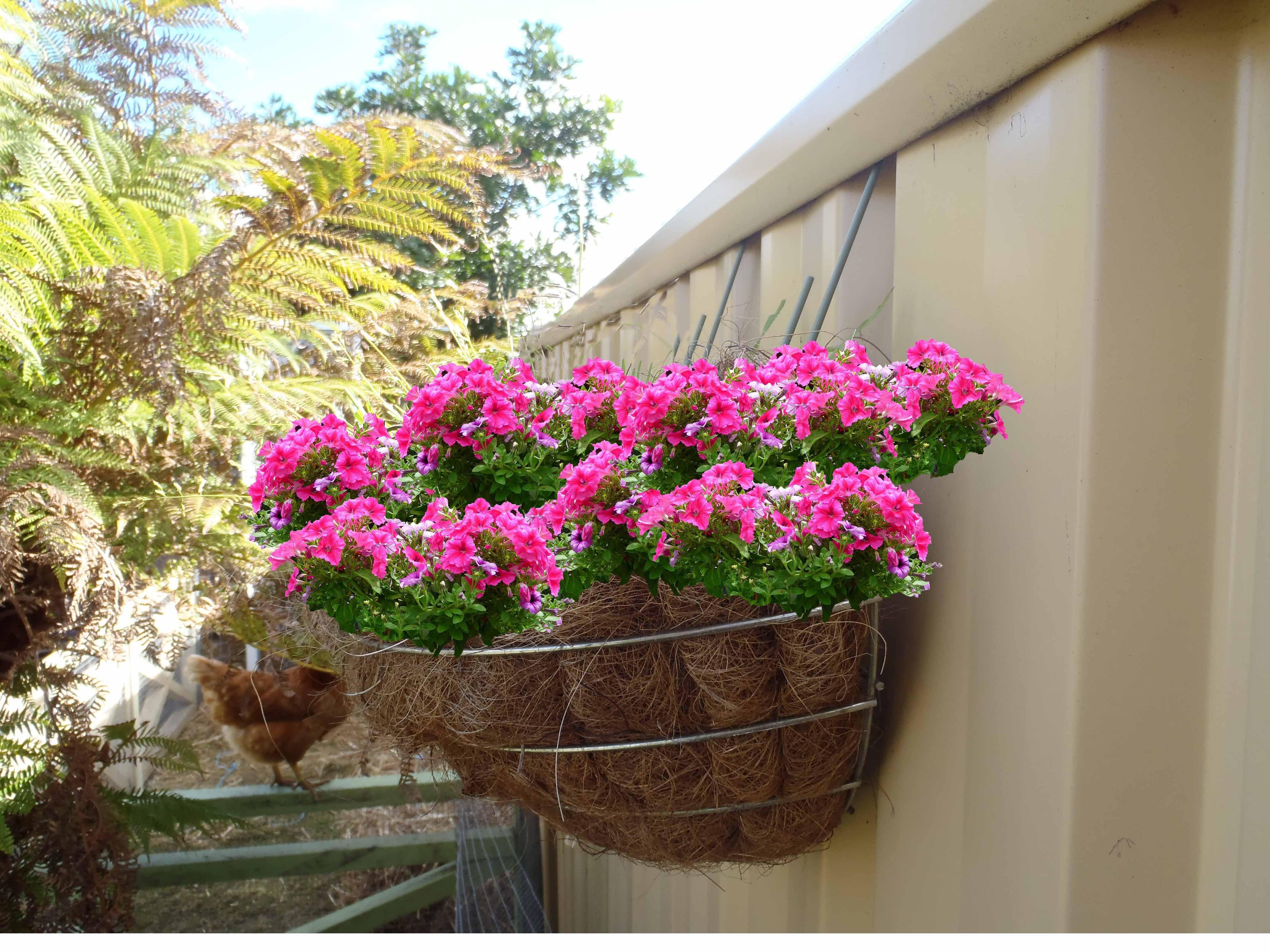 Flower Baskets On Fence : Hook a plant basket on colorbond? steel fencing with