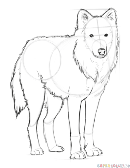 how to draw an arctic wolf step by step drawing tutorials for kids and beginners