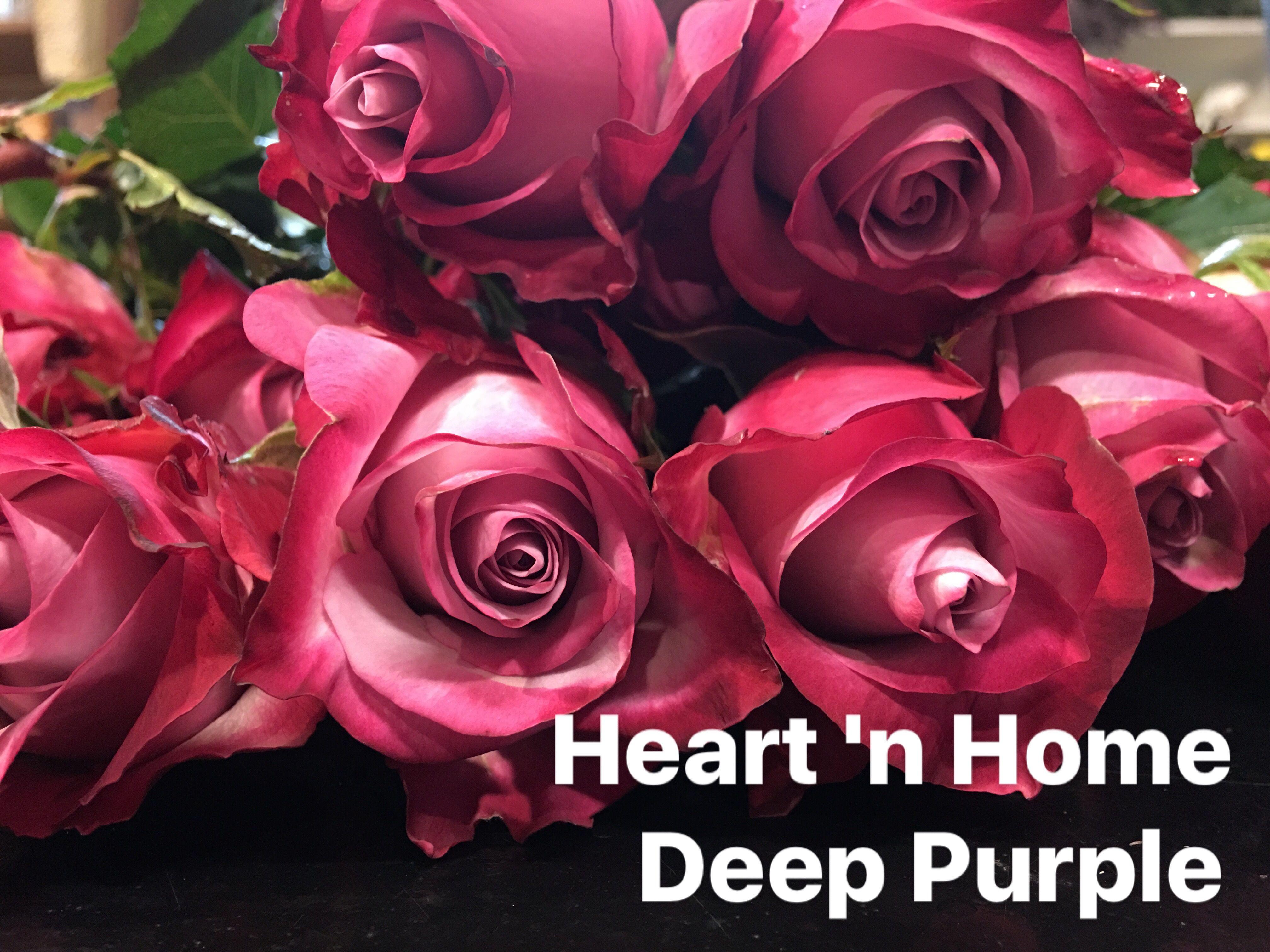 Deep purple roses 50 cm purple roses rose florist