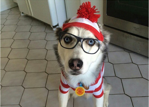 cute siberian husky all dressed for halloween husky love rh pinterest com husky eyes husky and