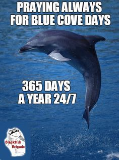 24, 2015, Blue Cove, Taiji Dolphins