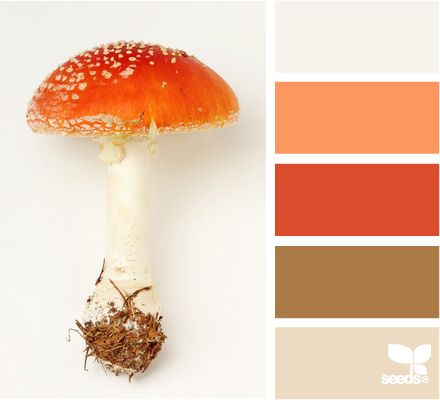 Mushroom Hues Seeds Color Design Seeds Orange Color Palettes