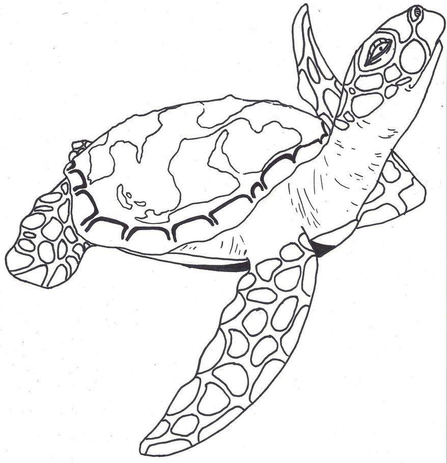 Sea Turtle By Paxnyx On Deviantart Turtle Sketch Turtle Outline Turtle Art