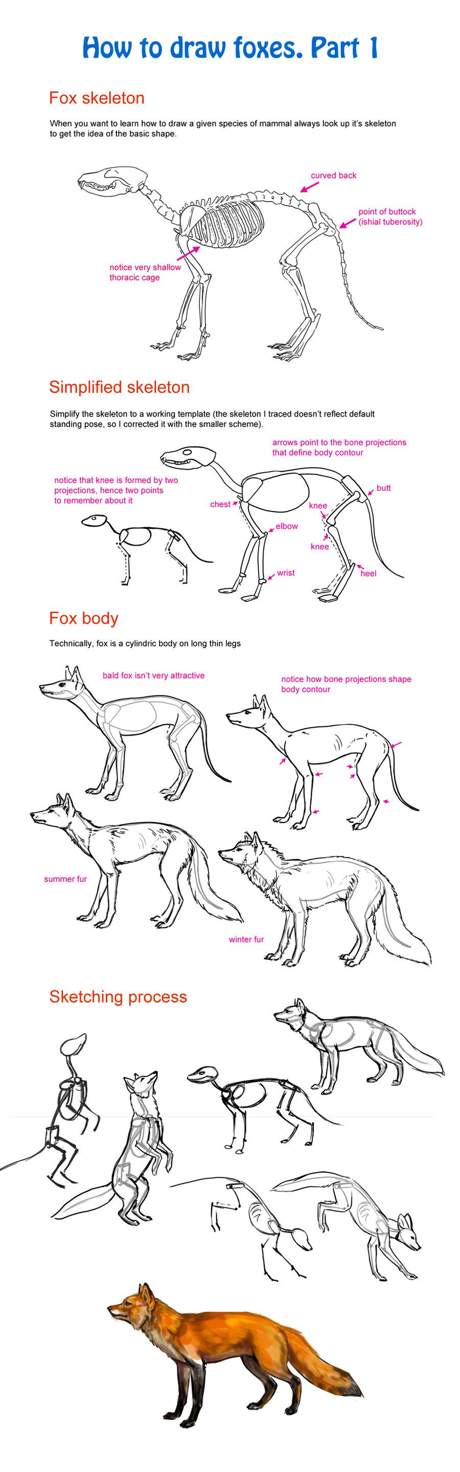 How to draw fox, part 1 by Elruu.deviantart.com on @deviantART