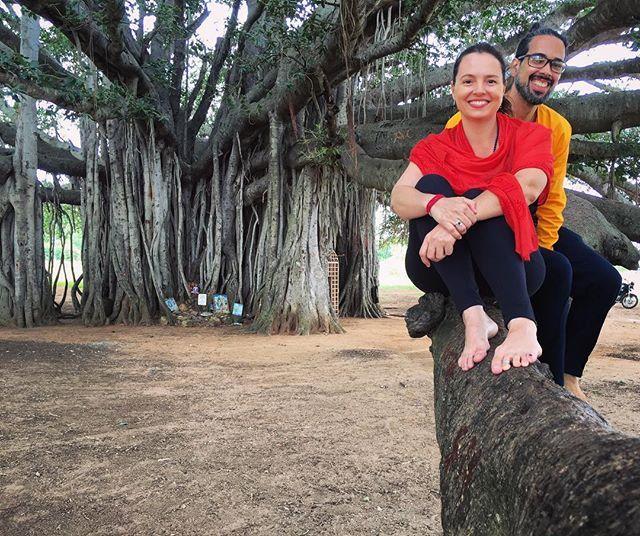 Banyan Tree Apartments: Banyan Tree Árvore De Mais De 400 Anos Em Mysore Eu E Meu