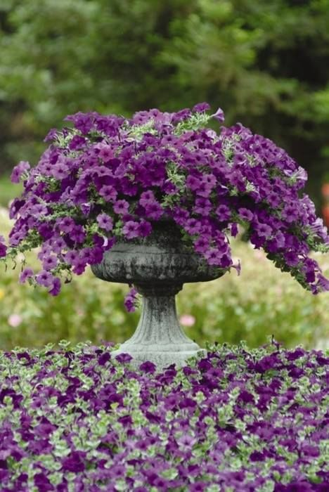 Purple Flowers —