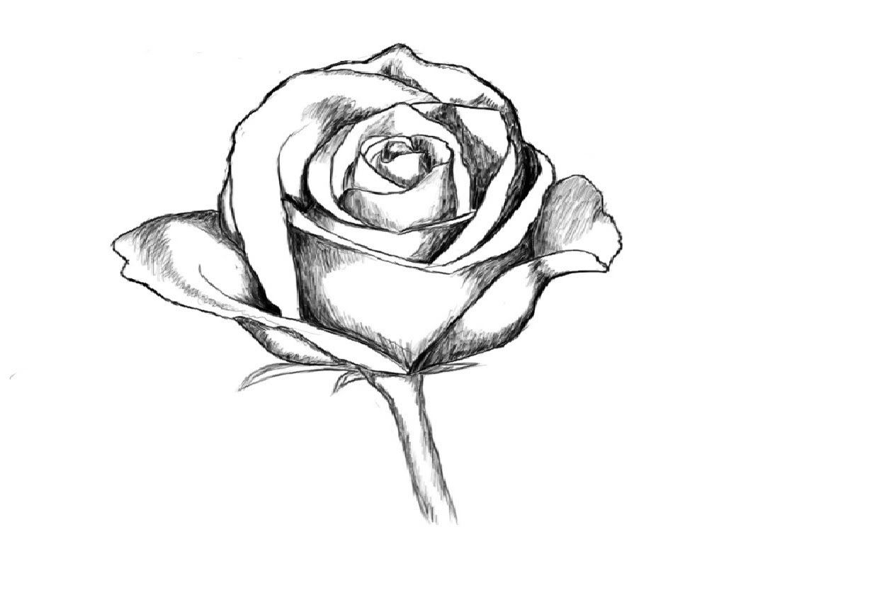 Love Roses Drawings Step By Step Galleryhip Com The Hippest Flower Drawings With Color Flower Drawing Tumblr Rose Drawing Tattoo