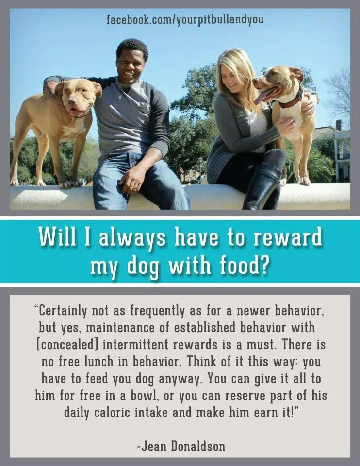 Jean Donaldson Quote Positive Dog Training