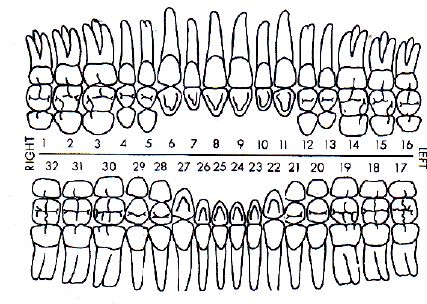 Dental Perio Charting Dental Charting Dental Assistant Study Dental Assistant School