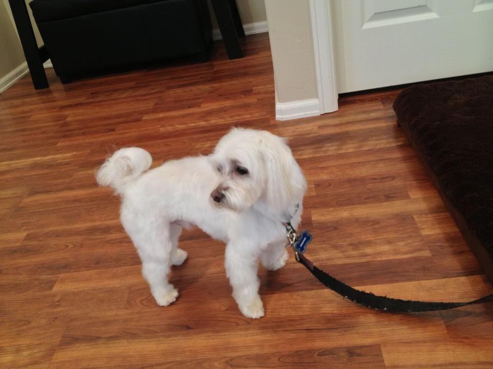 Utah Dog Groomer The Dog Spot Pet Grooming Maltese Mix Dog Groomers Pet Grooming Dogs