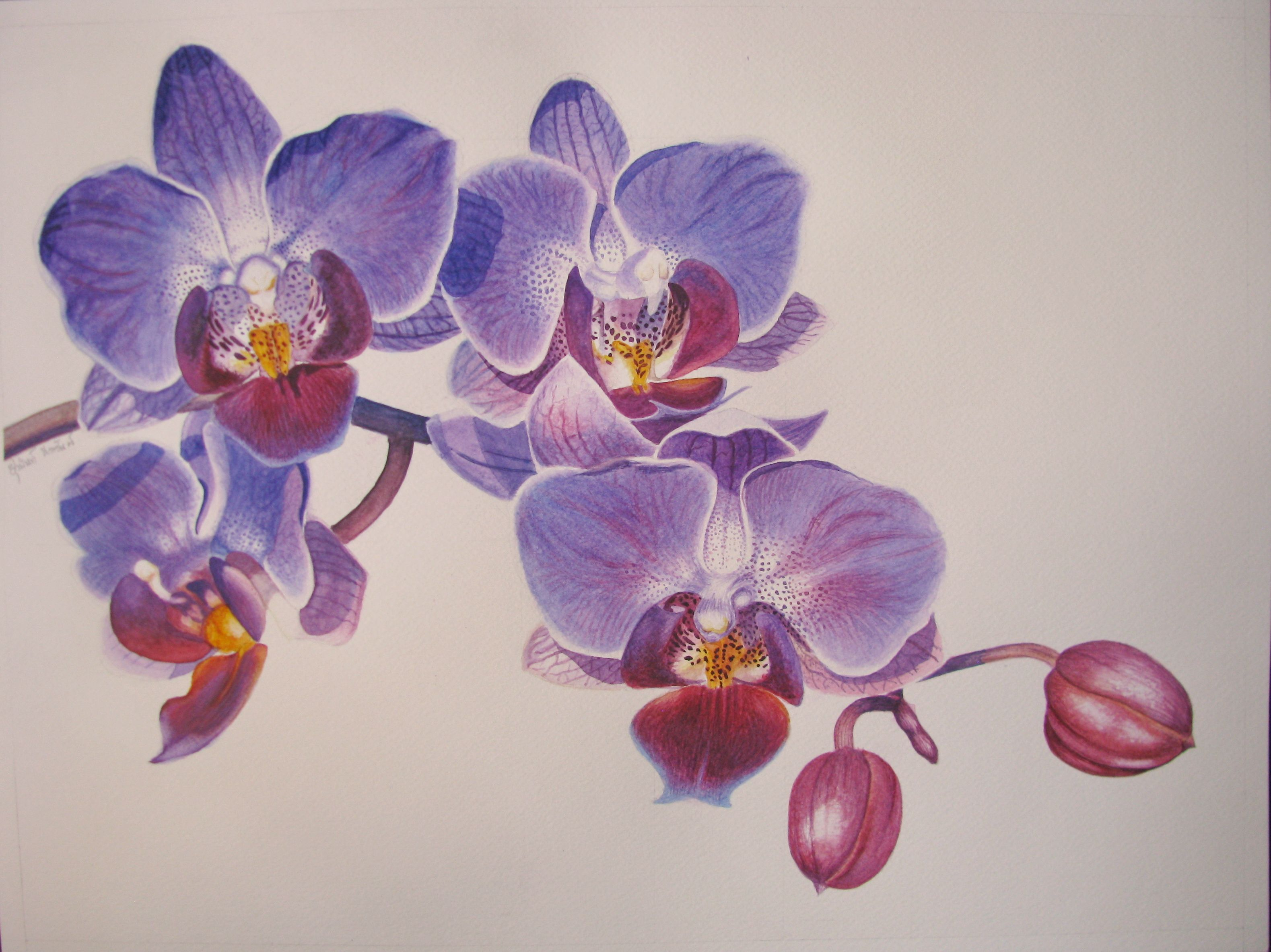 Purple Orchid 14 X 19 In Watercolor Paper Artist Yuwanunn Narasun Painting