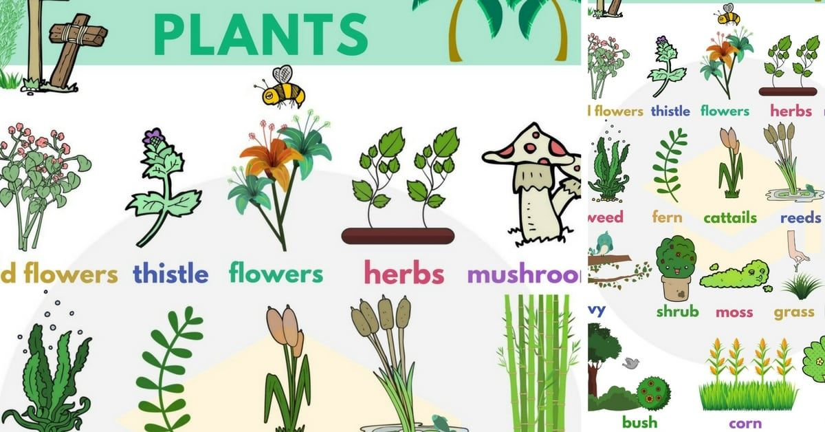 Plant Names List of Common Types of Plants and Trees