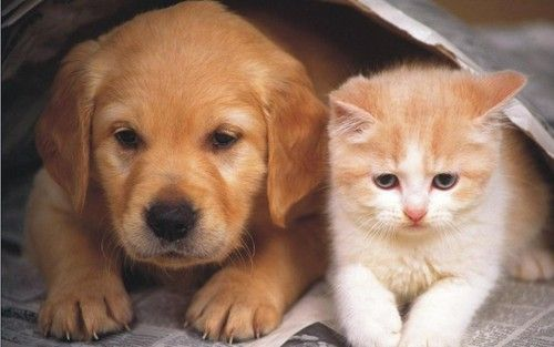 Dog And Cat Wallpaper Cute Cats And Dogs Funny Puppy Pictures Dogs