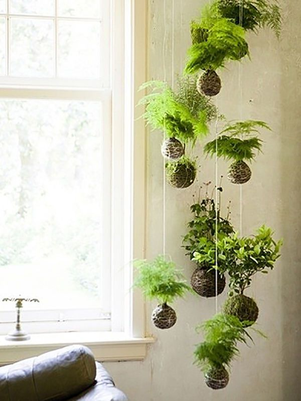 "KOKEDAMA The name is derived from the Japanese words for moss (""koke"") and ball (""dama""), essentially creating a string garden. Kokedama is a great option for displaying low-light loving plants and can even be arranged as a hanging garden."