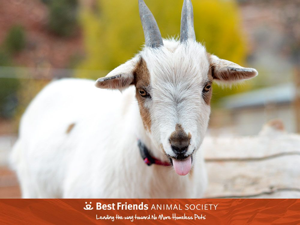 Adopt From Our Sanctuary Animal Society Animals Cool Pets
