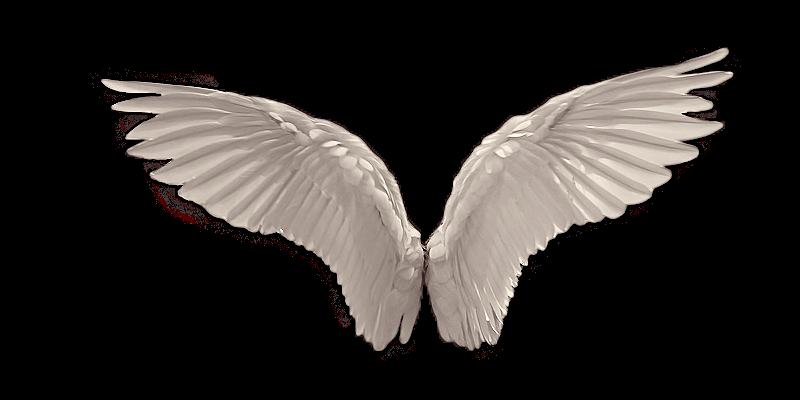 20 Gambar Sayap Malaikat Burung Dan Bidadari Keren Dyp Im Gambar Sayap Sayap Malaikat Gambar