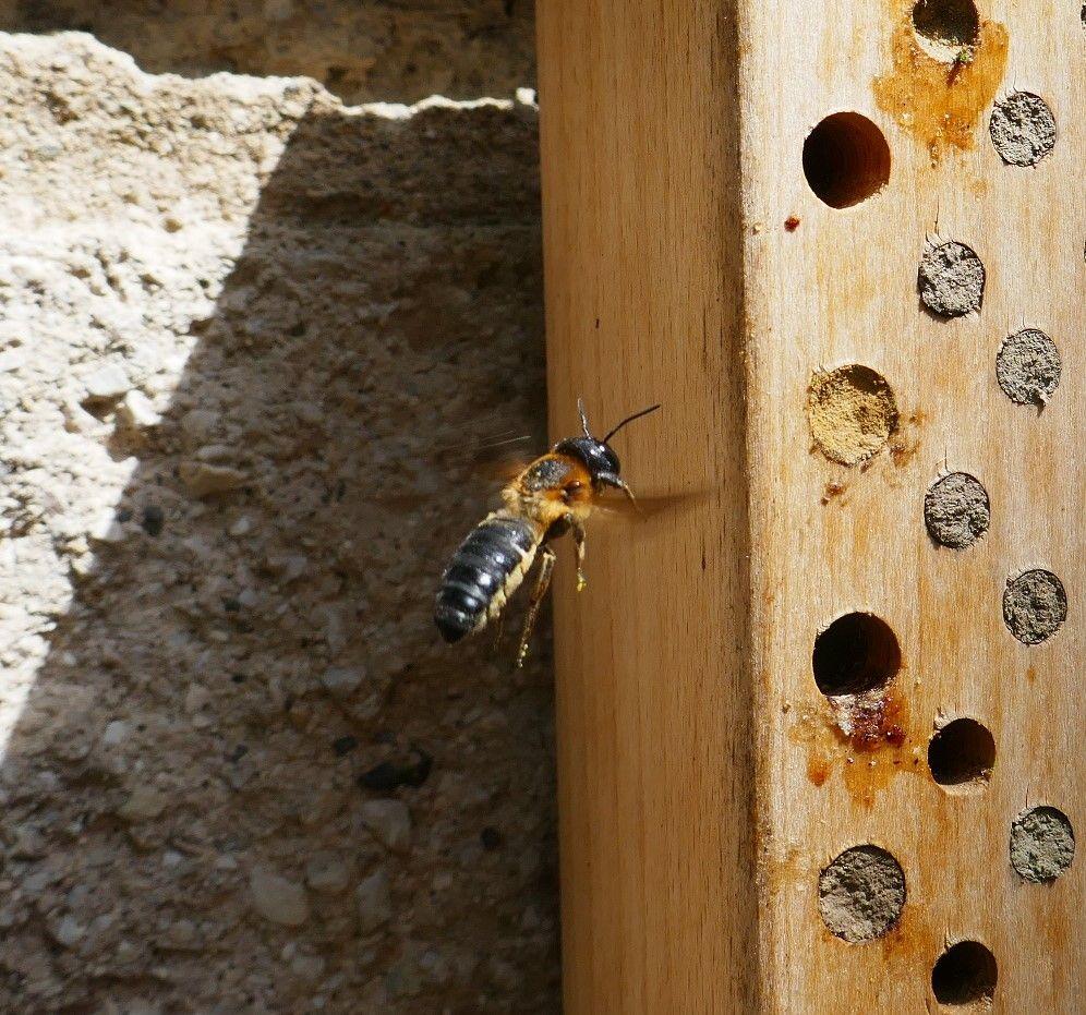 Nistrohrenverschlusse Der Wildbienen Hortus Girasole Bienen Wildbienen Wild
