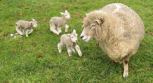 Nhu cầu sử dụng tinh chất nhau thai cừu trong làm đẹp cũng không ngừng tăng lên, kể cả các ngôi sao Hollywood cũng đua nhau tìm đến nhau thai cừu để duy trì thể trạng sức khoẻ và tuổi thanh xuân của mình.
