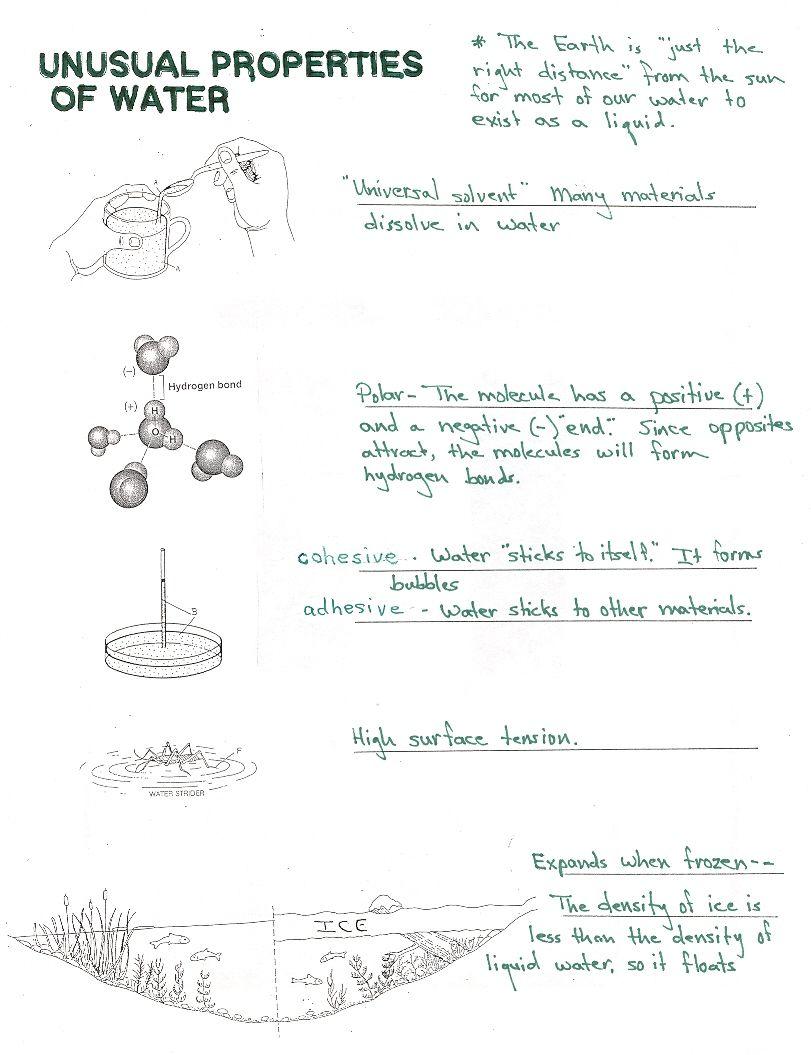 Properties Of Water Worksheets Biology Biology Worksheet Kindergarten Worksheets Worksheets