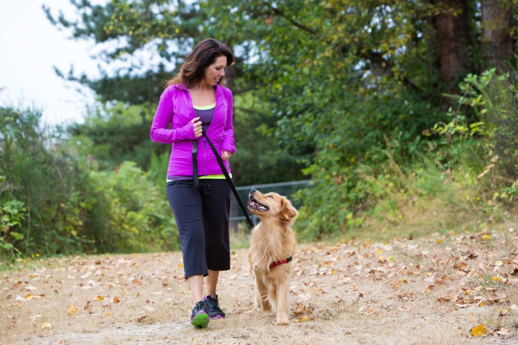How To Find The Best Dog Walker Dog Training Near Me Dog