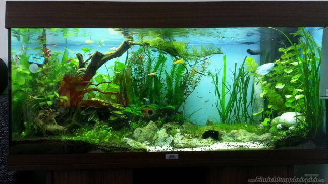 die besten 25 aquarium einrichtungsbeispiele ideen auf pinterest aquascaping aquarium. Black Bedroom Furniture Sets. Home Design Ideas