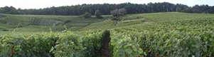 Champagne in summer www.the-champagne.ch Zürcher-Gehrig AG Switzerland @ZGAChampagne www.facebook.com/pages/Zurcher-Gehrig-AG