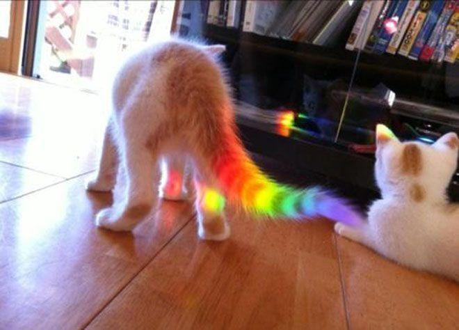 Nyan Cat Nyan Cat Funny Animal Pictures Rainbow Kittens
