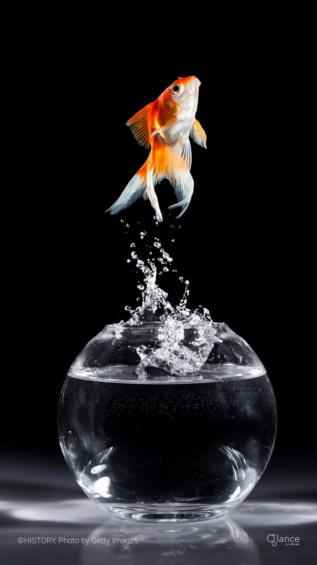 Pin By Faheem On Photography Fish Wallpaper Fish Art Watercolour Inspiration