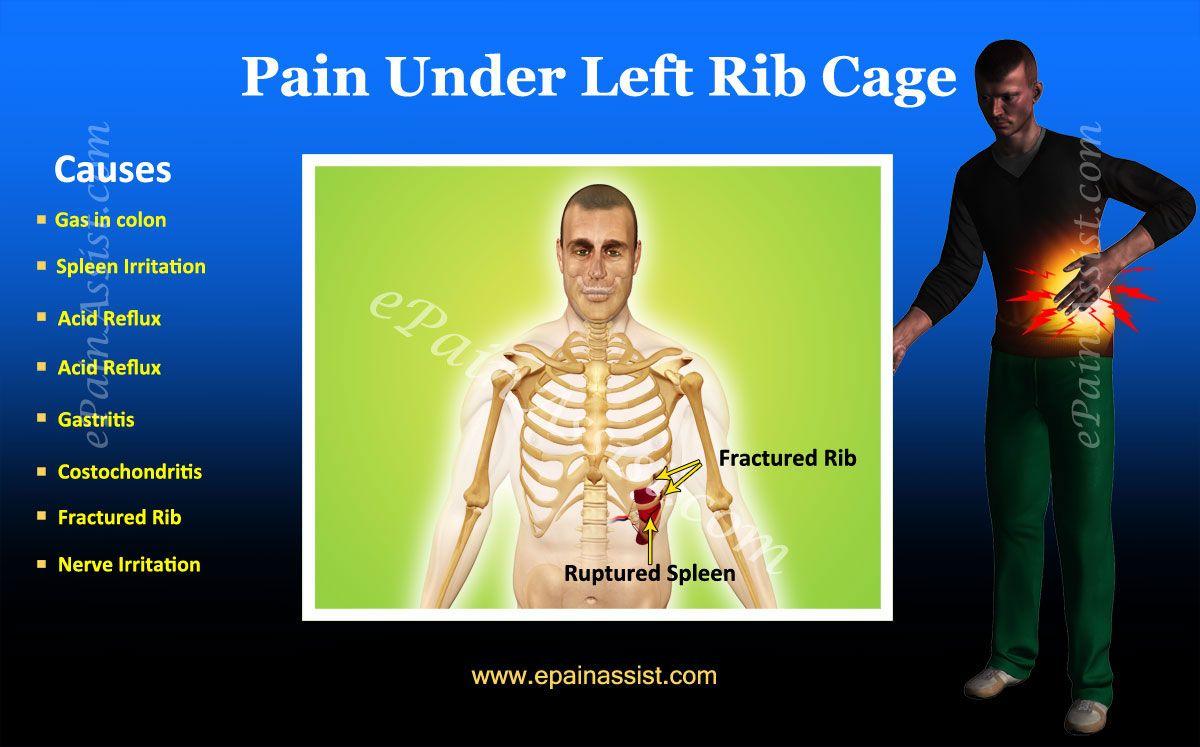 Anatomy left side under rib cage