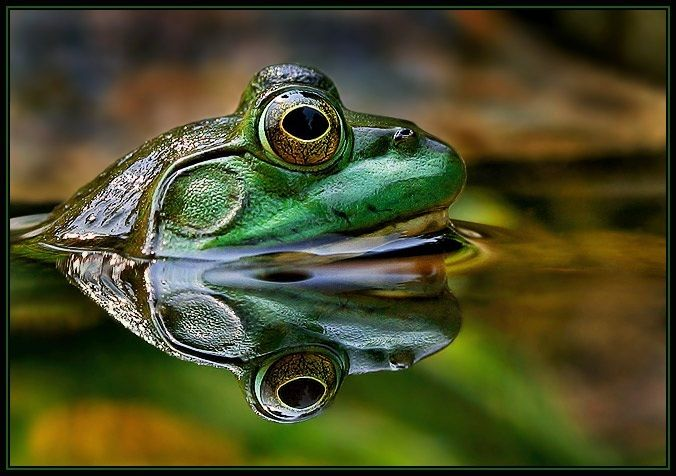 Amazing Pics Highlighting Only The Best Photographs Frog Frog And Toad Reptiles And Amphibians