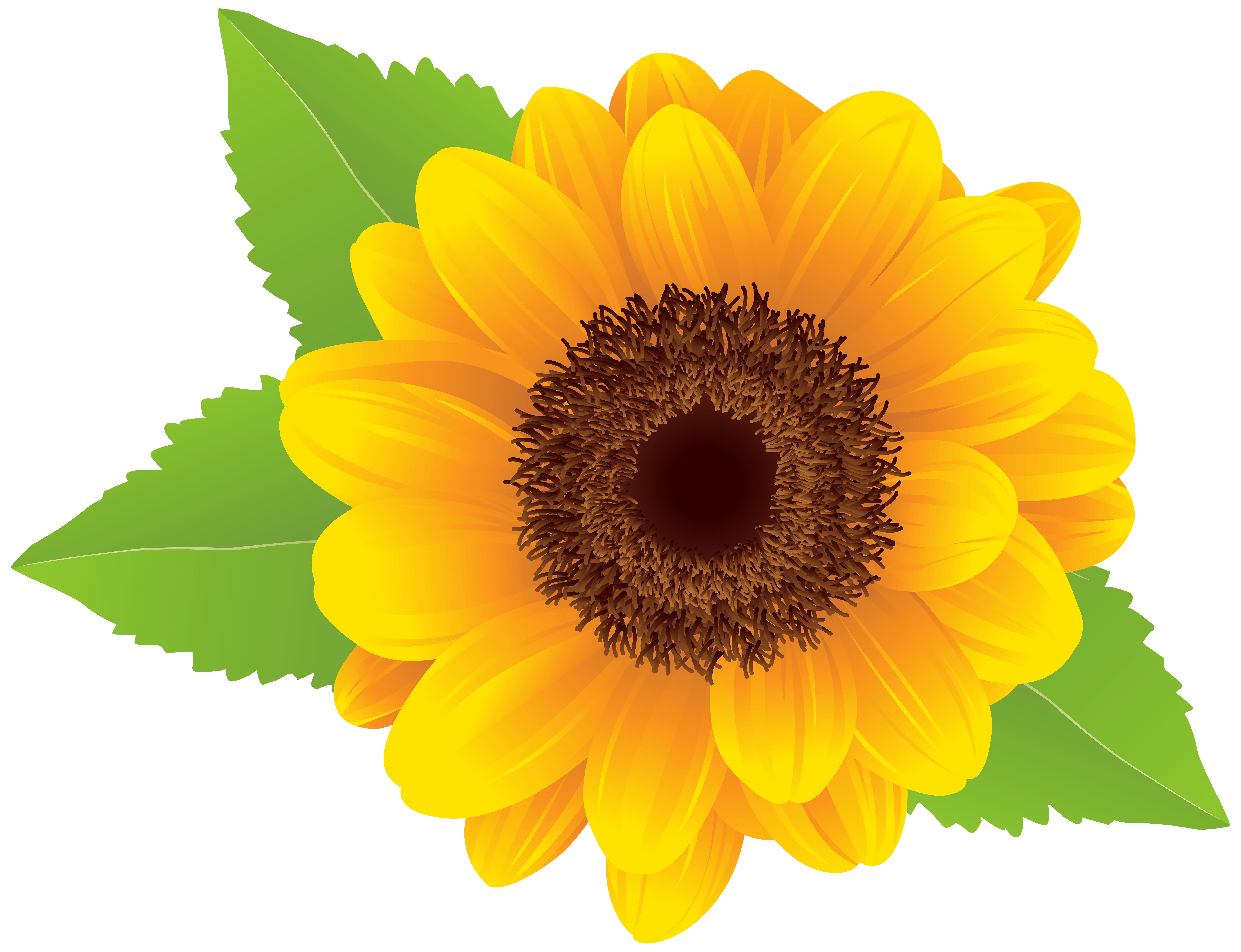 Sunflower PNG Clip Art Image | Arte girassol, Girassol desenho