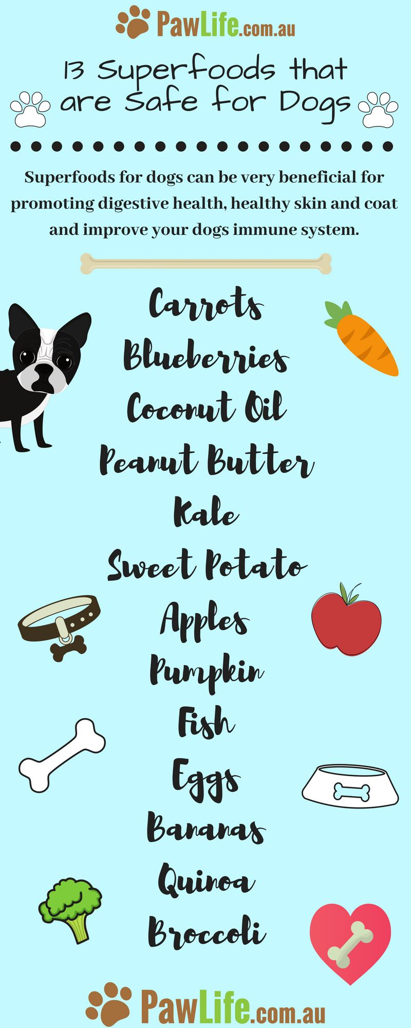 13 Superfoods That Are Safe For Dogs Pumpkin Dog Treats Dog