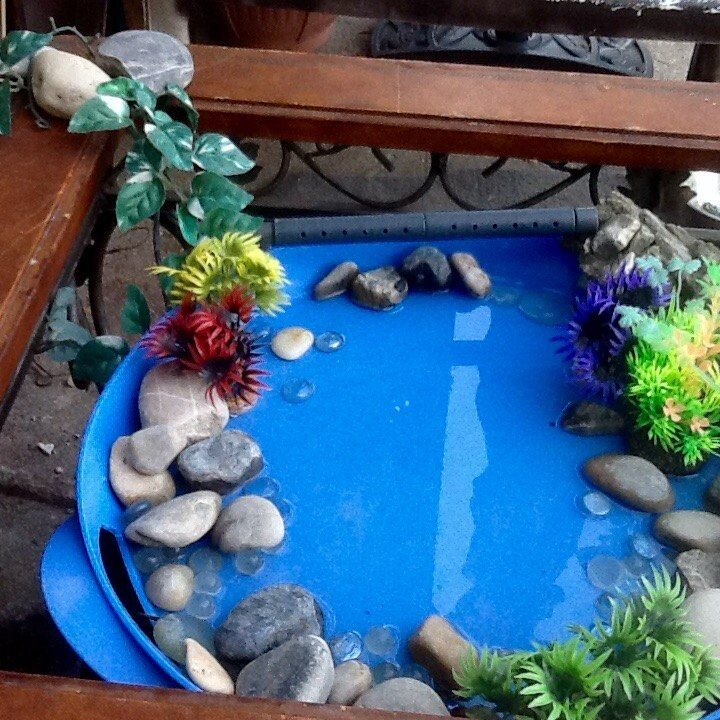 Simple Water Features For The Garden: Bird Bath Garden, Humming Bird