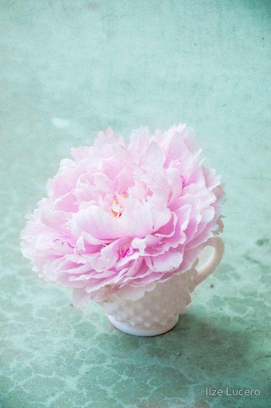 Pink Peony on aqua texture
