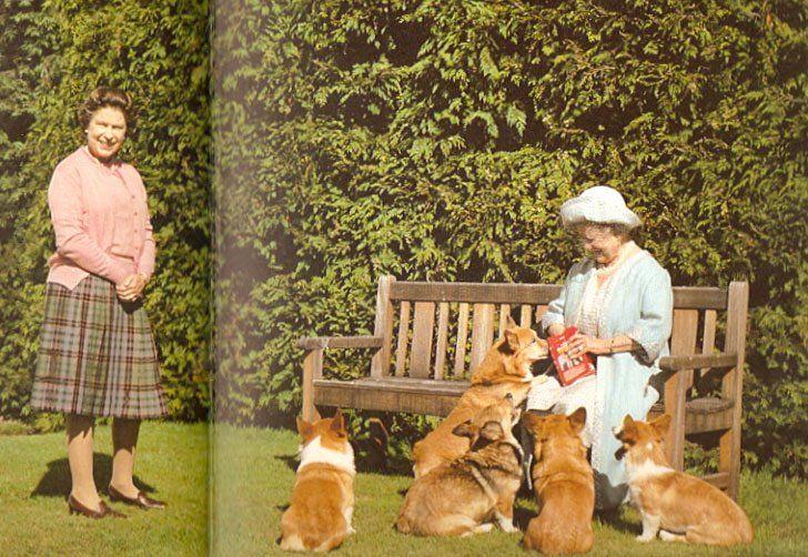 [english-dog-queen.jpg]