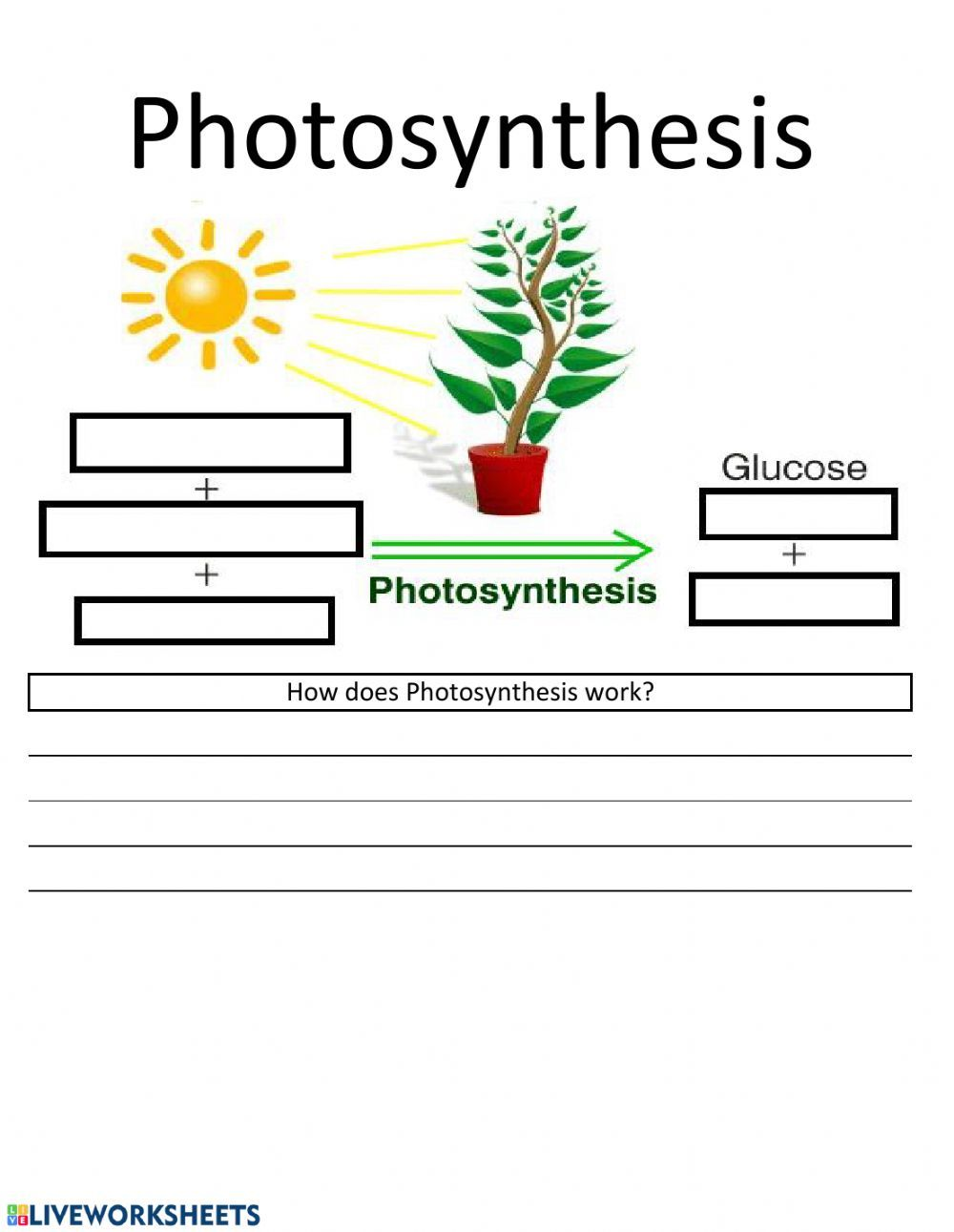 Photosynthesis Worksheet In 2020 Photosynthesis Worksheet Photosynthesis Science Worksheets