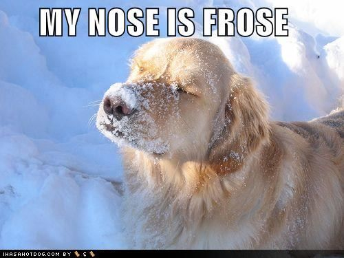 Funny Cold Weather | At least in the mornings..and in the ...