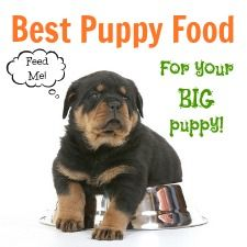 Best Large Breed Puppy Food Choices Best Puppy Food Puppies