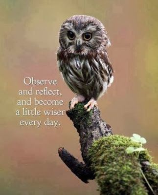 observeer en reflecteer en wordt elke dag een beetje wijzer
