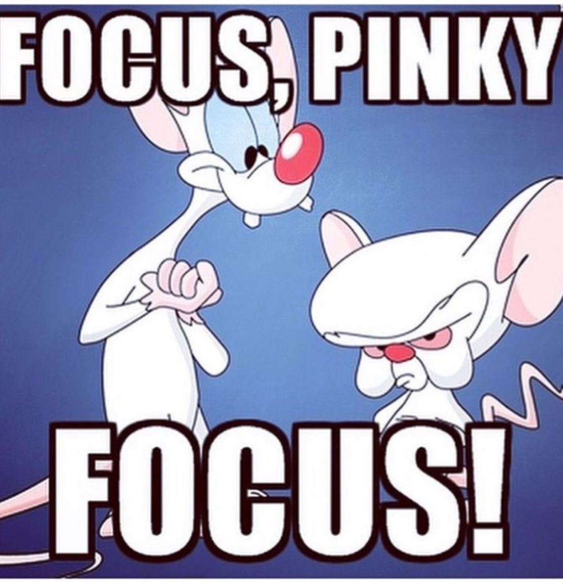 Pinky And The Brain Funny Quotes Wwwtopsimagescom