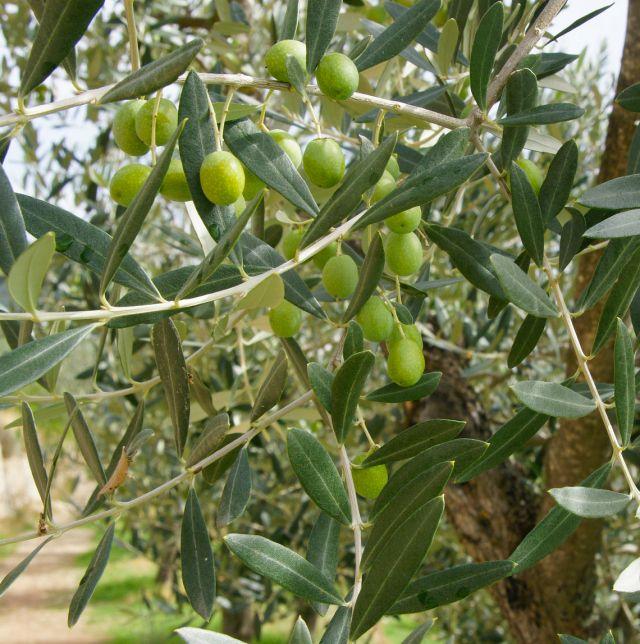 Menu For Olive Garden: 10 Surprising Low-water Plants