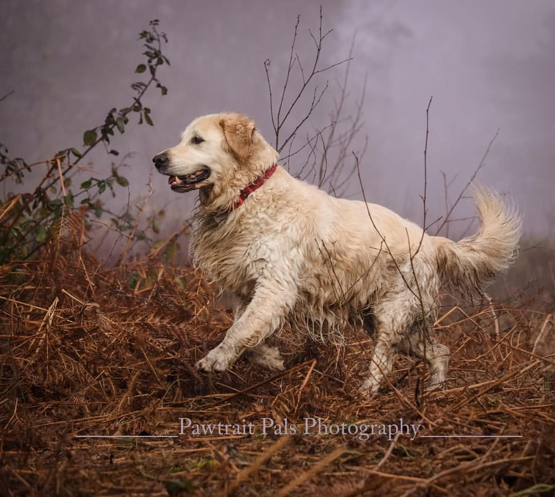 45 Likes 4 Comments Pawtrait Pals Pet Photography Pawtraitpals On Instagram Springing Into The Weekend Boing Boing Animal Photography Dogs Outdoor Dog